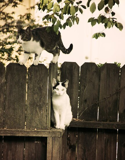 The Fence Cats by Kimberly Palmer