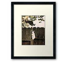 The Fence Cats Framed Print