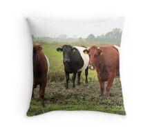 Three Dutch Belted Bulls Throw Pillow
