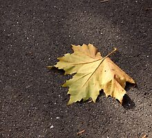 The Golden Fall by coffeebean