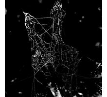 Spider-web Photographic Print