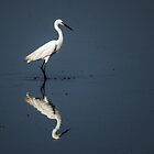 Upon reflection by Mortimer123
