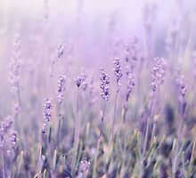Lavender by Lady-Tori