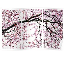 Cherry Blossoms- The Panel Series Poster