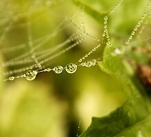 Natures Jewelry by Micci Shannon