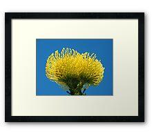 Golden Protea Framed Print