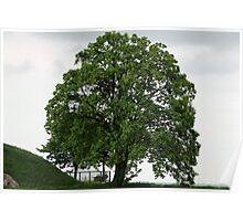 Majestic Tree Poster