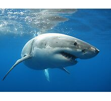 Great White Shark Photographic Print