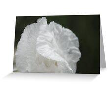 Paper thin petals Greeting Card