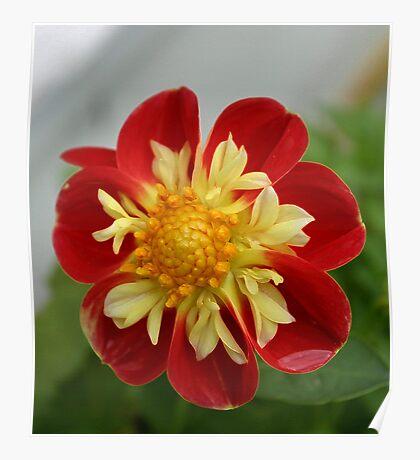 flower enhanced Poster