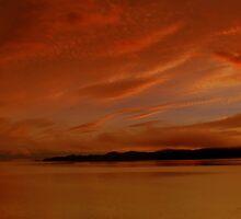 On Golden Bay by Gail Bridger