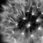 Black and White Fireworks by Tam  Locke