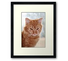 Barney at the Window Framed Print