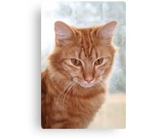 Barney at the Window Canvas Print