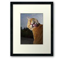 Ginger cat licking fur   Framed Print