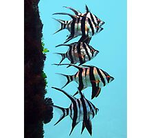 Old Wives fish Photographic Print
