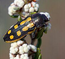 Beetle. by trevorb