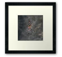 Spider with Web Framed Print