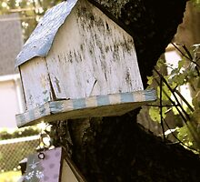 Forgotten Birdhouses by Anna Gizzi