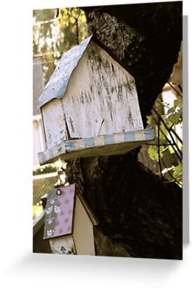 Forgotten Birdhouses by Anna Gizzi