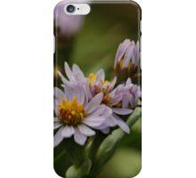 Aster Alpinus iPhone Case/Skin