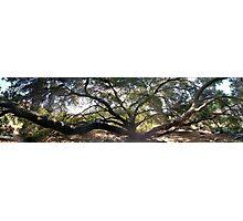 Aged tree Photographic Print