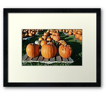 Pick a Pumpkin any Pumpkin! Framed Print