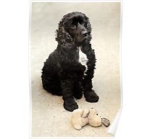 cute black spaniel with bunny Poster