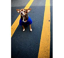 Personable Pooch Photographic Print