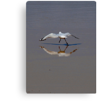 Flight or Fight Theory Canvas Print