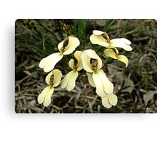 Cow Kicks, Stylidium schoenoides Canvas Print