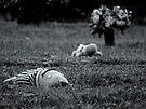 Rest in Peace II by kutayk