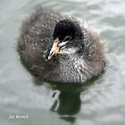 Mini Coot by Joy Rensch