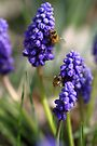 Busy Bees by yolanda