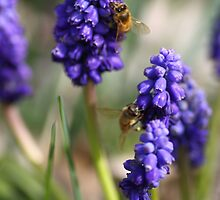 Busy Bees by yolanda