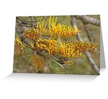 Grevillea robusta Greeting Card