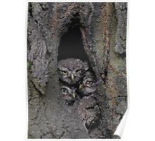 3 little little owls Poster