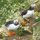 Puffins on Bempton Cliffs. by Lilian Marshall