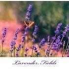 Lavender Fields - 1 by jules572