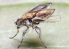"""""""Fly-Botz.......Return of the Insektoidz"""" by atomikboy"""
