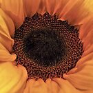 Sunflower - Macro Close Up by David Alexander Elder