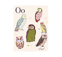 alphabet poster - owls Photographic Print