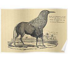 Black Gnoo- Crow hybrid, Jabberwocky quote Lewis Carroll Poster