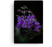 Forest flower (violet) Canvas Print