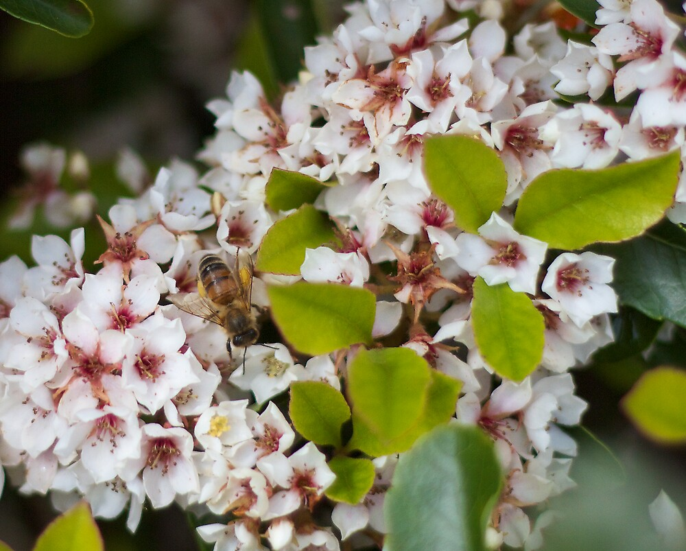 Busy Little Bumble Bee by Hannah McLaren