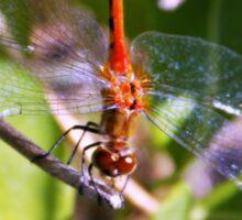Red Dragonfly Sticker