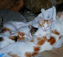 A Cuddle of Cats by Karen Martin