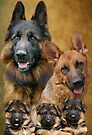 German Shepherd Family Collage by Sandy Keeton