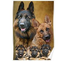 German Shepherd Family Collage Poster