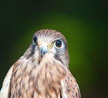 HAWK by imagetj